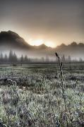 Johnson Photos - Morning Fog Hangs On The Ground by Carl Johnson