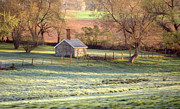 Scenic Woodlands Posters - Morning Frost Poster by Skip Willits