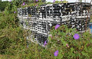 Theresa Willingham Metal Prints - Morning Glories and Crab Traps Metal Print by Theresa Willingham