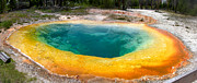 Morning Glory Art - Morning Glory Geyser Yellowstone National Park by Dave Dilli