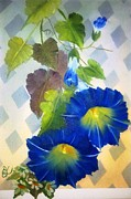 Wildlifeartgallerie Galleries - Morning Glory