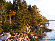 New England. Pyrography Prints - Morning Glow Print by Susan Russo