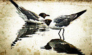 Vintage Prints - Morning Gulls - Seagull Art By Sharon Cummings Print by Sharon Cummings
