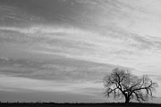 Lone Tree Prints - Morning Has Broken Like the First Gentle Breeze BW Print by James Bo Insogna