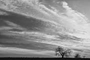 Morning Has Broken Three Trees Bw Print by James BO  Insogna