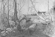 Wildlife Landscape Drawings - Morning Hunt by Dan Theisen