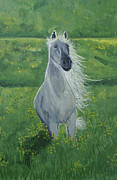 Gray Horse Posters - Morning In The Pasture Poster by Donna Blackhall
