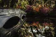 Reflections In River Prints - Morning Light - Azalea Garden and White Bridge reflection in the water Print by Mark Serfass