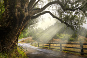 Backroads Prints - Morning Light Print by Debra and Dave Vanderlaan