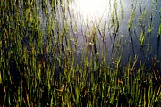 Swamps Prints - MORNING LIGHT of GOD Print by Karen Wiles