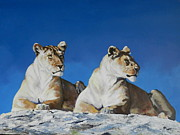 Robert Teeling - Morning Lionesses