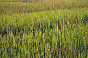 Green - Morning Marsh Grasses on Jekyll Island by Bruce Gourley
