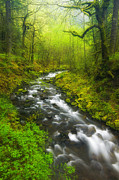 Lush Green Posters - Morning Misty Creek Poster by Darren  White
