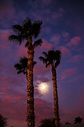 Desert Photography Posters - Morning Moon Poster by Robert Bales