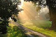 Hazy Metal Prints - Morning on Country Road Metal Print by Olivier Le Queinec