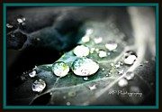 Michaela Preston Metal Prints - Morning Rain Metal Print by Michaela Preston