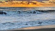 Seagull Metal Prints - Morning Rays Metal Print by Bill  Wakeley