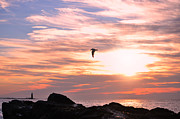 Sunrise Lighthouse Framed Prints - Morning Seagull Framed Print by Emily Stauring