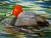 Ducks Paintings - Morning Swim by David Richardson