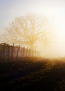 Shannon Beck Acrylic Prints - Morning Vineyard Acrylic Print by Shannon Beck