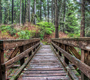Juan De Fuca Provincial Park Prints - Morning Walk Print by James Wheeler