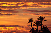 Moroccan Originals - Moroccan Sunset sky and palms  by John Copland