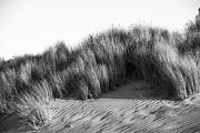 Terry Garvin - Morro Beach Shrubbery