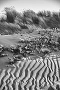 Terry Garvin - Morro Beach Textures BW