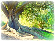 Tree Roots Digital Art Posters - Morton Bay Fig Tree - With Border Poster by Leanne Seymour
