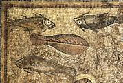 Mosaic Photos - Mosaic Of The Fish Of La Pineda. Beg by Everett