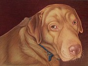 Labrador Retrievers Drawings - Moses   old portrait by Danielle R T Haney