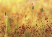 Moss And Flowers - Greensboro North Carolina Print by Dan Carmichael