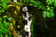 Water Flowing Prints - Moss And Water Print by Jeff  Swan
