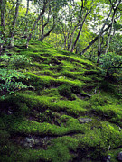 Dappled Light Photo Metal Prints - MOSS FOREST in KYOTO JAPAN Metal Print by Daniel Hagerman