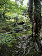 Dappled Light Photo Metal Prints - Moss Forest Japan Metal Print by Daniel Hagerman
