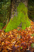 Graham Photo Originals - Moss Meets Leaf by Graham Foulkes