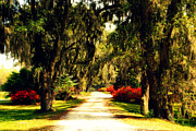 Trees And Palm Trees - Moss on the Trees at Monks Corner in Charleston by Susanne Van Hulst