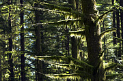 Backlit Prints - Moss Print by Sharon  Talson