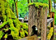 Moss Green Photo Framed Prints - Mosspost Framed Print by Benjamin Yeager