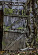 Western Kentucky Prints - Mossy Barn Door Print by Amber Kresge