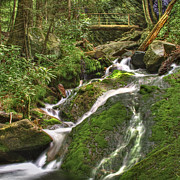 Rock Spring Trail Prints - Mossy Creek Print by Debra and Dave Vanderlaan