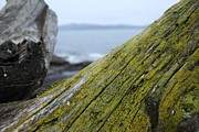 British Columbia Prints - Mossy Driftwood And Rock Meet At The Ocean Print by Graham Foulkes