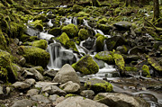 Cascades Prints - Mossy Falls Print by Heather Applegate