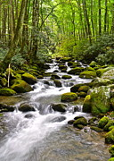 Mossy Framed Prints - Mossy Mountain Stream Framed Print by Robert Harmon