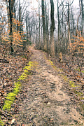 Susan Smith Posters - Mossy Path Poster by Susan Smith