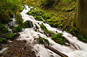 Storybook Prints - Mossy River flowing. Print by Jamie Pham
