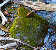 Outdoors Prints - Mossy Rock Print by Brent Dolliver
