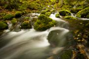 Brookes Framed Prints - Mossy Rocks Along Lavis Brook In The Framed Print by Irwin Barrett