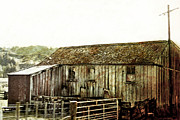 Barn Yard Metal Prints - Mossy Shed Metal Print by Linde Townsend