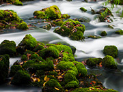Mossy Spring Print by Shannon Beck-Coatney
